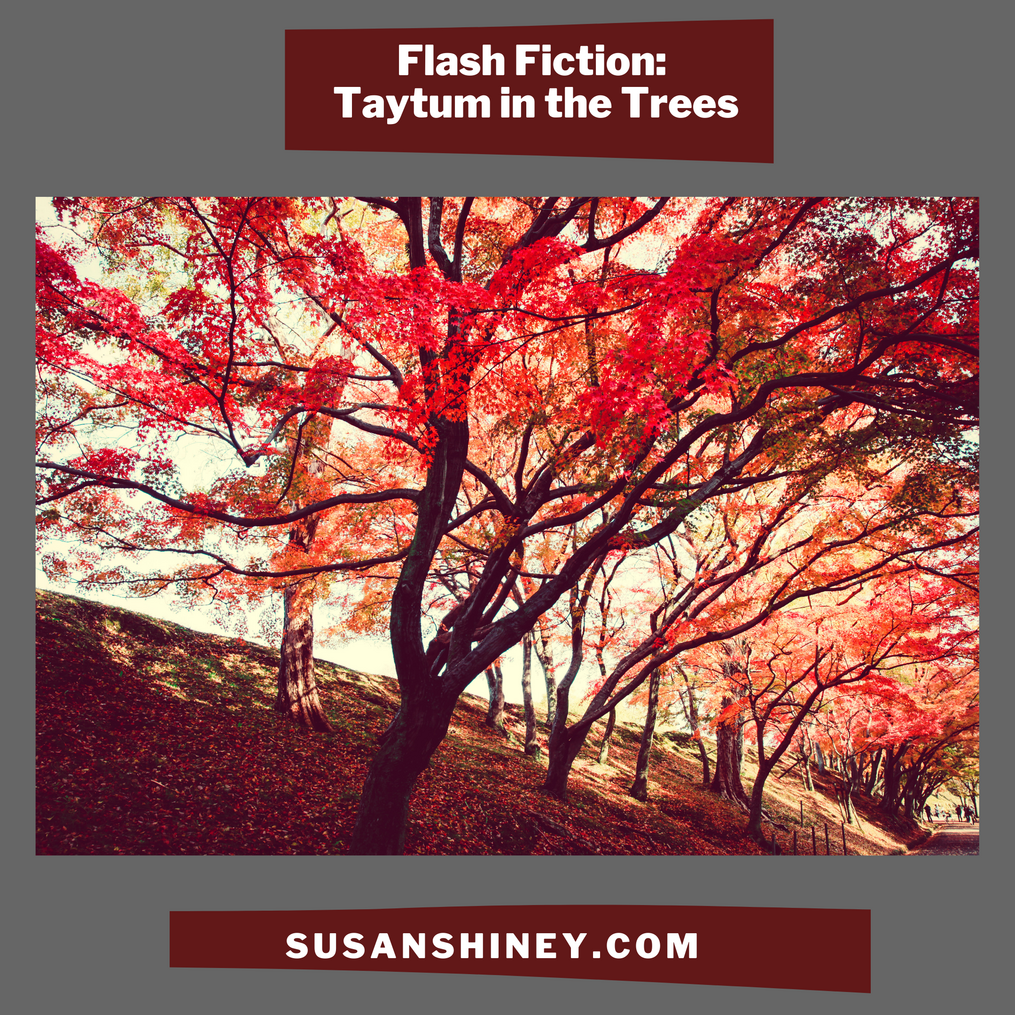 Featured-Image-Flash-fiction-short-story-taytum-in-the-trees-short-fiction-susan-shiney-adult-tree-climber-story