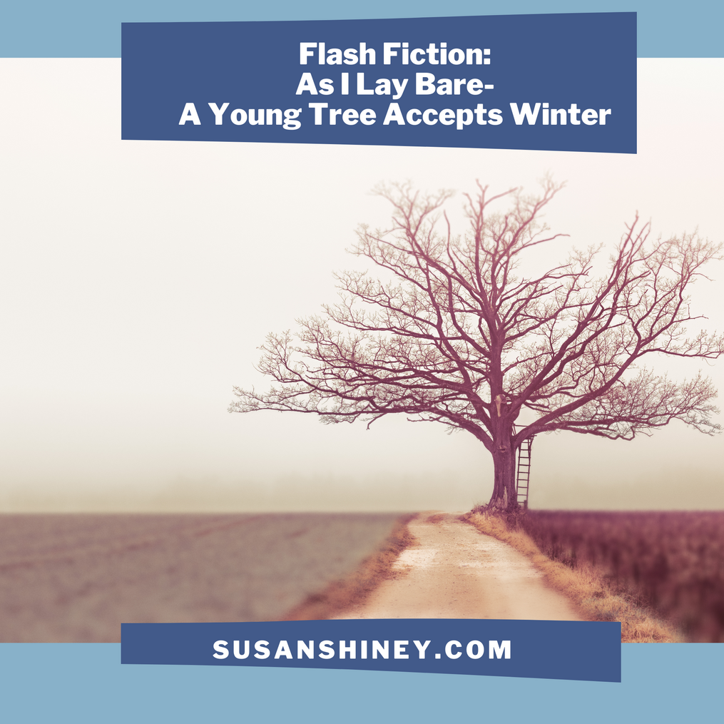 Featured-Image-Flash-Fiction-As-I-Lay-Bare-A-Young-Tree-Accepts-Winter-susan-shiney-anthropomorphic-story